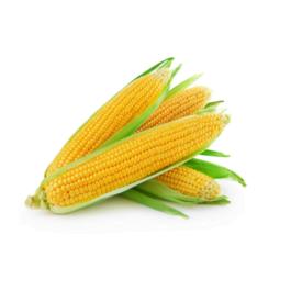Kukurydza kolba szt